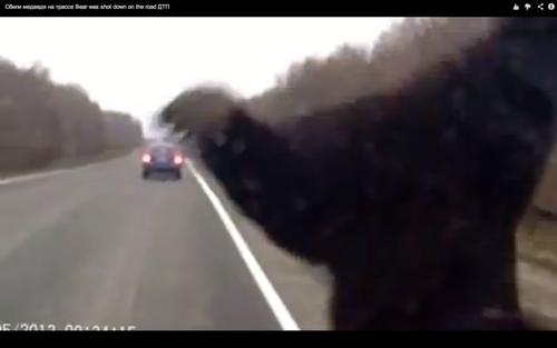 A dash cam video of a bear colliding with a car in Russia has gone viral