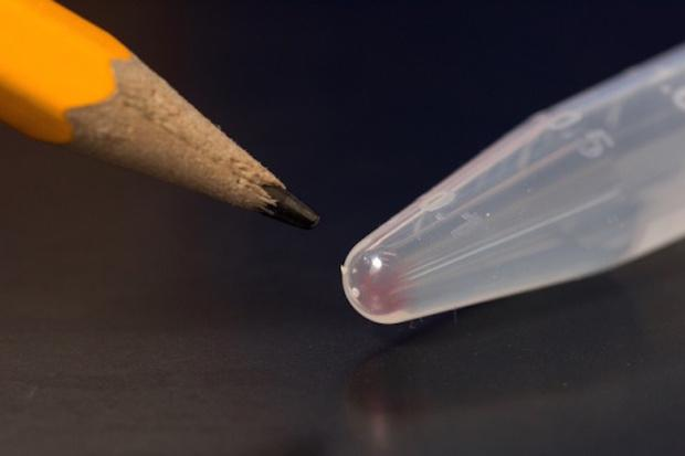 All the movies, images, emails and other digital data from more than 600 basic smartphones (10,000 gigabytes) can be stored in the faint pink smear of DNA at the end of this test tube. Credit: Tara Brown Photography/University of Washington