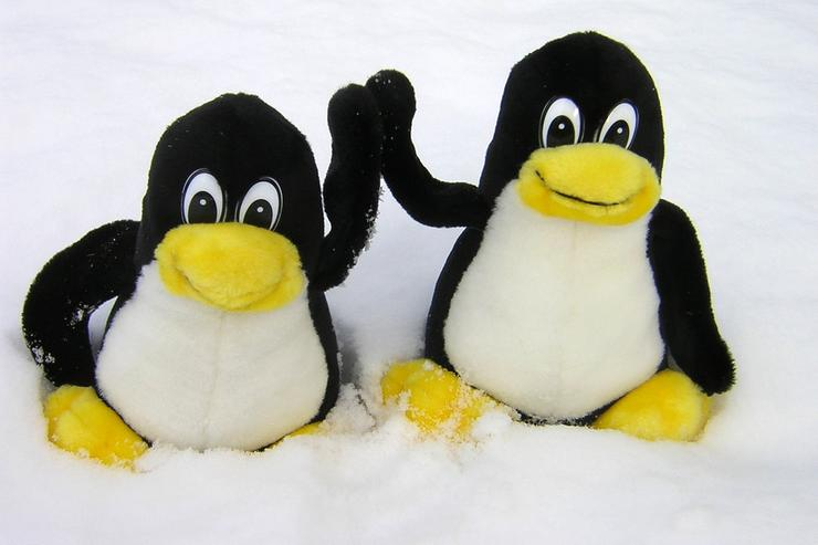Tux! Linux Image: http://www.flickr.com/photos/frenchy/ (Creative Commons)