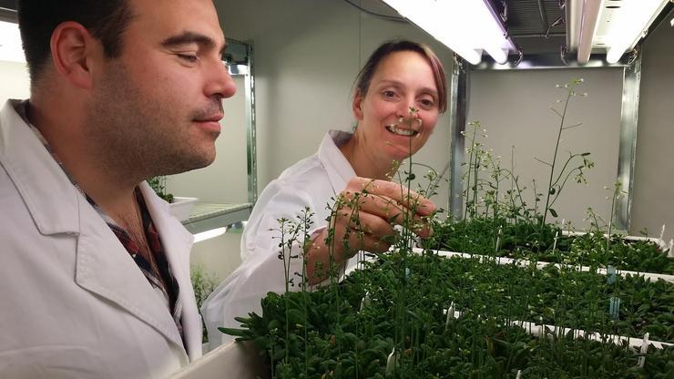 Edwin Lampugnani and Dr Monika Doblin examine plants as part of the Cell Wall Synthesis project.