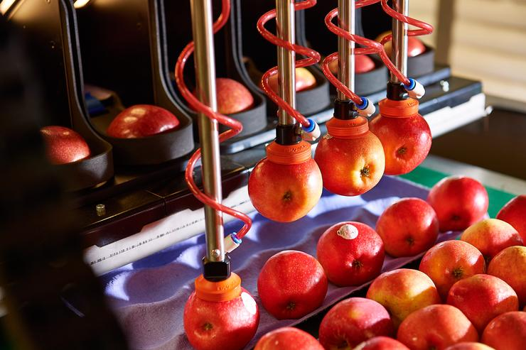The robotic apple packing technology was originally developed by Massey University graduates, Dr Alistair Scarfe and Kyle Peterson.