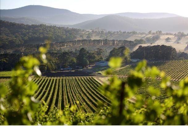 Smartphone app recruited to keep vineyards in the Yarra Valley bug