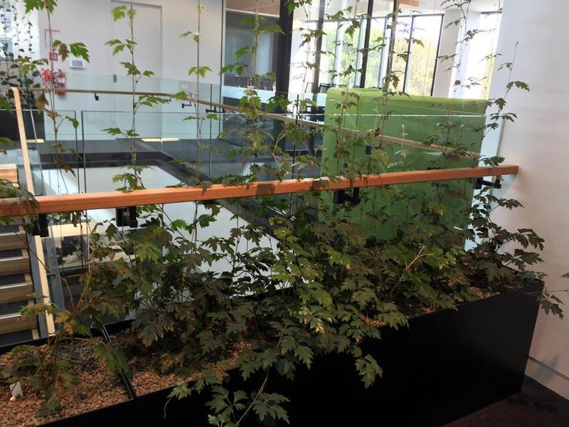Inside Ricoh's 'intuitive' building