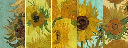 The five 'Sunflowers' paintings by Vincent van Gogh are located in museums across the globe. In a world first, the  paintings are being featured together in a 'virtual exhibition' at the National Gallery, London. (Photo from The National Gallery website)